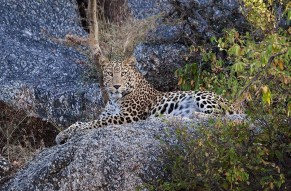 A Journey To Jawai Leopard Hills