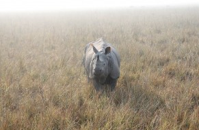Wild Heaven Tour of Kaziranga National Park