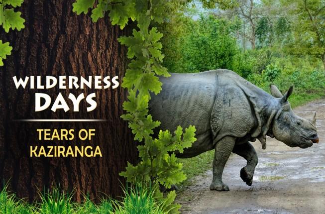 One Horned Rhino-Kaziranga Tour