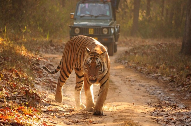 Extensive Indian Wildlife Tiger Tour