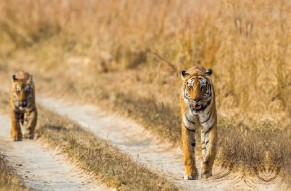 The World Famous Jim Corbett National Park Tour