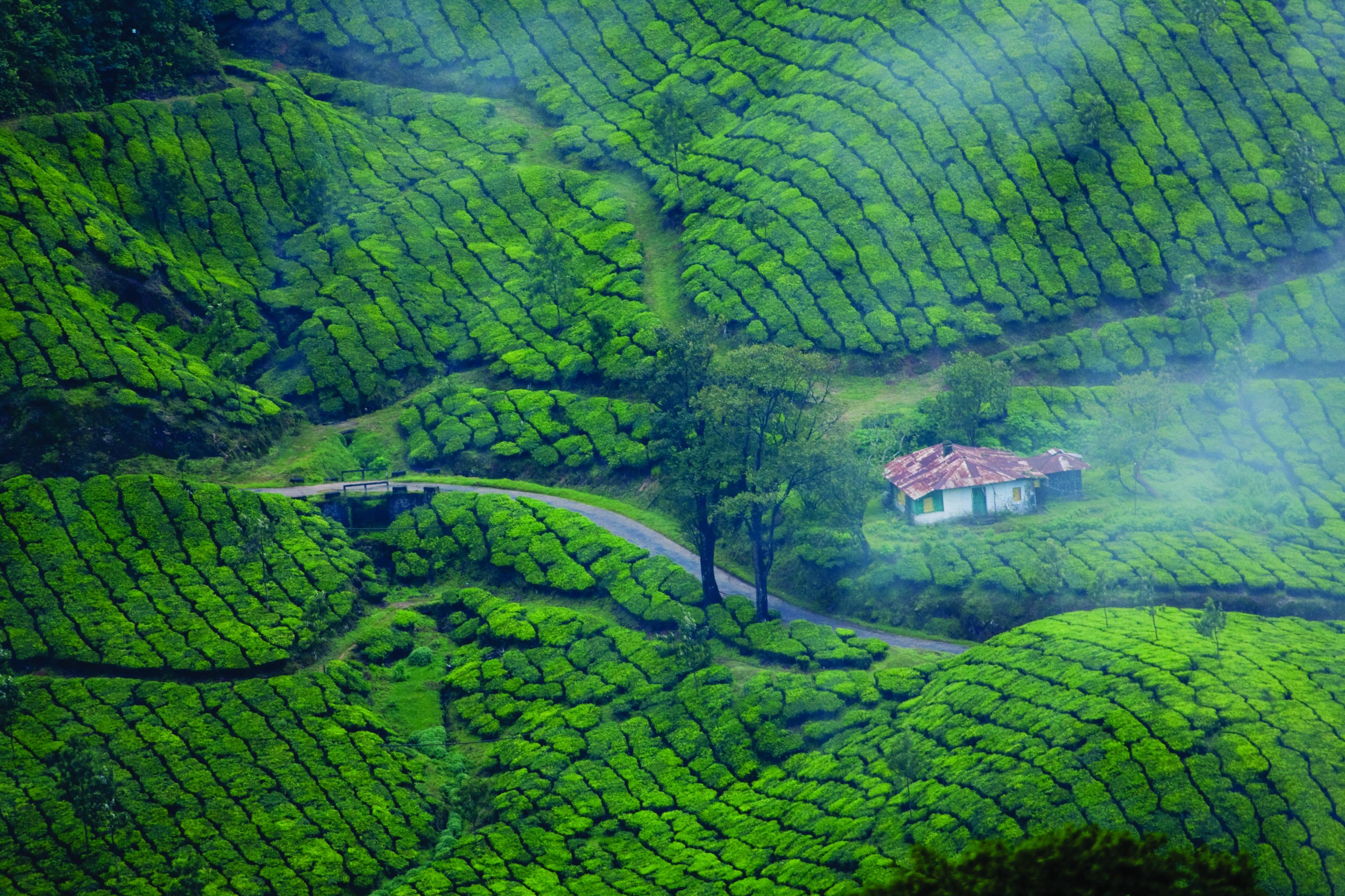 At Home in Kerala