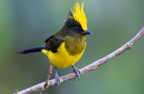 Birding Tour in Arunachal Pradesh and Assam