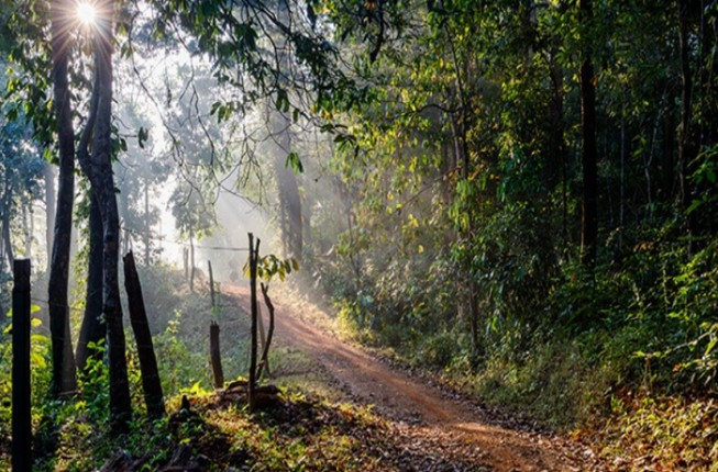Explore The Western Ghats With Biodiversity Experts